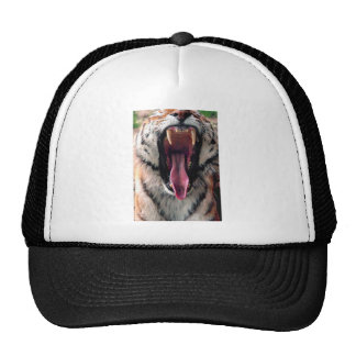 Tiger Bearing Teeth Cap
