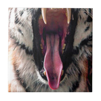 Tiger Bearing Teeth Small Square Tile
