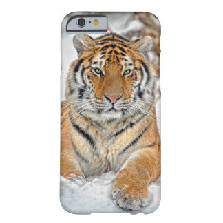 Tiger Beauty in Snow Barely There iPhone 6 Case