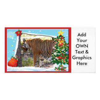 Tiger Bengali-c-2 copy Photo Card
