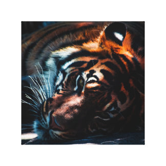 """Tiger canvas 12"""" x 12"""", 1.5"""" stretched canvas prints"""
