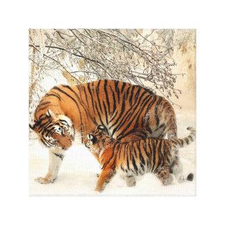 Tiger canvas 12x12 canvas print
