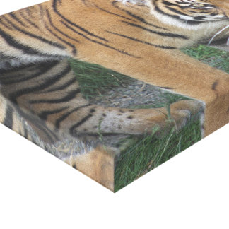 Tiger Canvas Canvas Prints