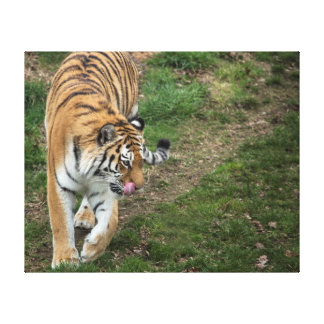 Tiger Gallery Wrapped Canvas