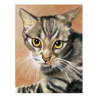 Tiger Cat Kitten Animal  Postcard