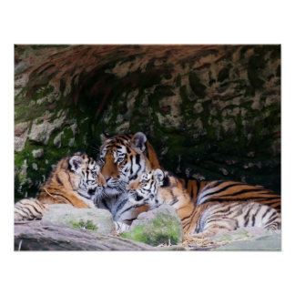 Tiger Cat Print Custom Personalize Anniversaries