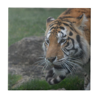 Tiger Ceramic Tile