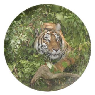Tiger-China-Doll-b-10 Dinner Plates