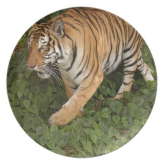 Tiger-China-Doll-b-12 Party Plate