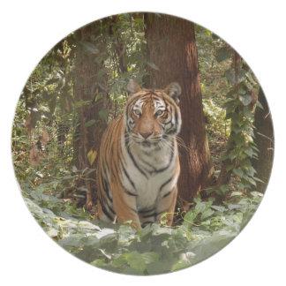 Tiger-China-Doll-b-14 Plate