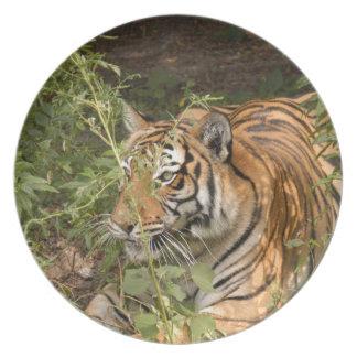 Tiger-China-Doll-b-15 Dinner Plate