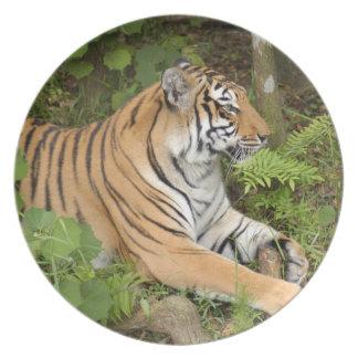 Tiger-China-Doll-b-20 Party Plates