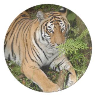 Tiger-China-Doll-b-23 Party Plates