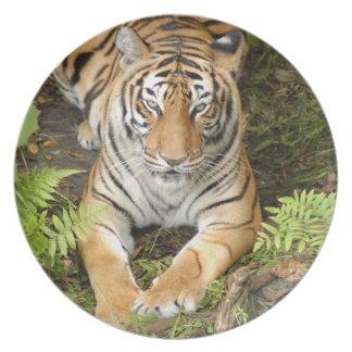 Tiger-China-Doll-b-29 Party Plates