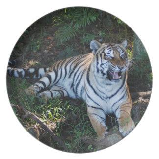 Tiger-China-Doll-b-7 Plate