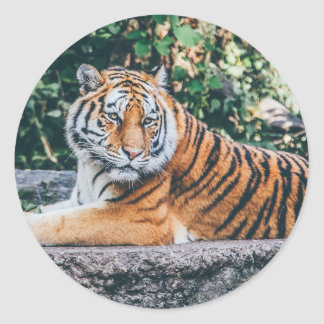 Tiger Classic Round Sticker