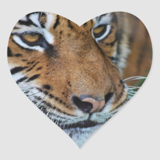 Tiger close up heart stickers