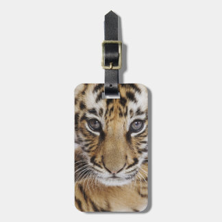 Tiger Cub (2 Month Old) Luggage Tag