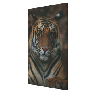 Tiger Cub Gallery Wrapped Canvas