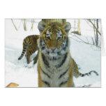Tiger Cub In Snow Portrait Greeting Card