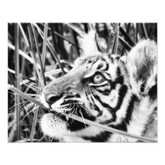 Tiger Cub in the Grass Art Photo