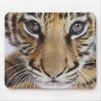 Tiger Cub Mouse Pad