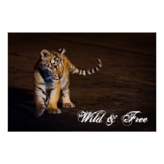 Tiger Cub Walking Poster