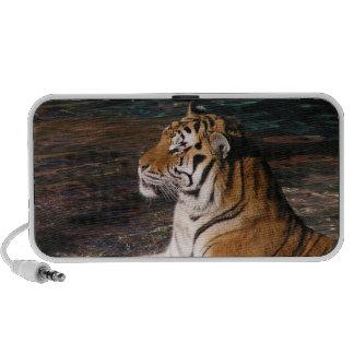 Tiger Doodle Speaker
