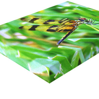 Tiger Dragonfly Canvas Print