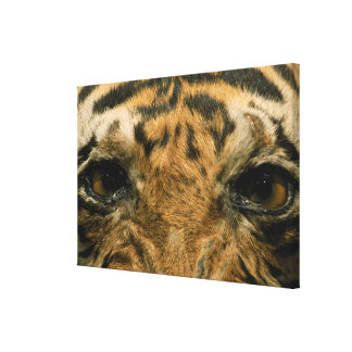 Tiger eyes stretched canvas print