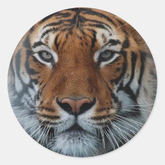 Tiger Face Classic Round Sticker