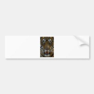 Tiger Face Close Up Bumper Sticker