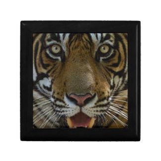 Tiger Face Close Up Gift Box