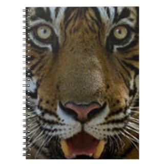 Tiger Face Close Up Notebook