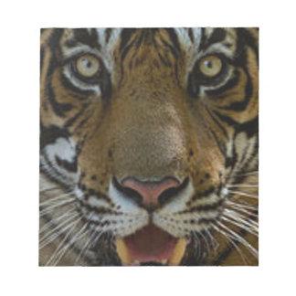 Tiger Face Close Up Notepad
