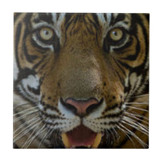 Tiger Face Close Up Small Square Tile