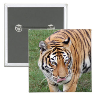 Tiger Friends-011 15 Cm Square Badge