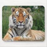 Tiger head beautiful close-up photo mousepad