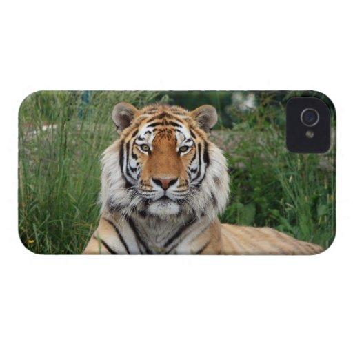 Tiger head beautiful photo blackberry bold case