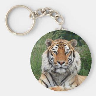 Tiger head beautiful photo keyring, keychain, gift key ring