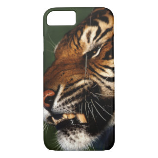 Tiger Head Close Up iPhone 7 Case