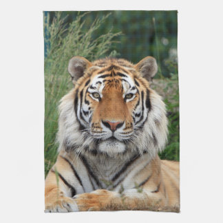 Tiger head male beautiful photo kitchen tea towel