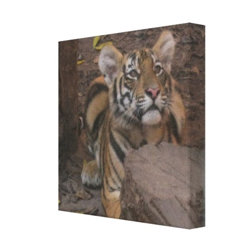 Tiger In Front Of A Log Wrapped Canvas Canvas Print