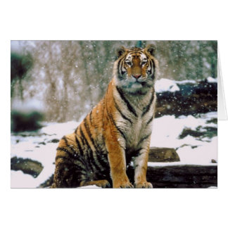 Tiger in Snow Card
