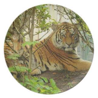 Tiger in The Forest Dinner Plates