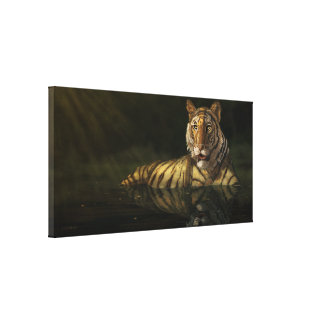 Tiger in the Water digital painting Gallery Wrapped Canvas