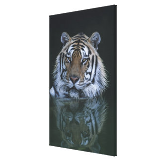 Tiger in Water Gallery Wrapped Canvas