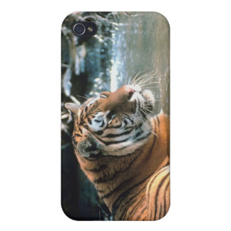 Tiger in water iPhone 4 cover