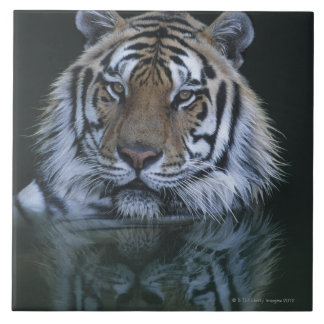 Tiger in Water Large Square Tile