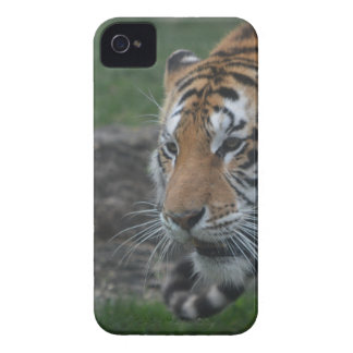 tiger iPhone 4 case